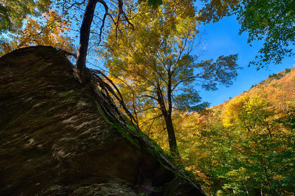 Smugglers Notch Photograph - Vermonts Smugglers Notch Tree Living In Rock by Jeff Folger