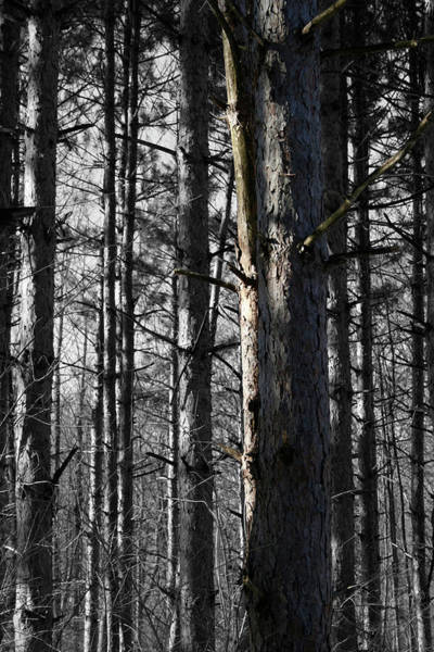 Photograph - Vertical Tangent by Dylan Punke