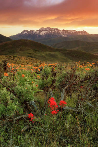 Wall Art - Photograph - Vertical Timp With Wildflowers by Johnny Adolphson