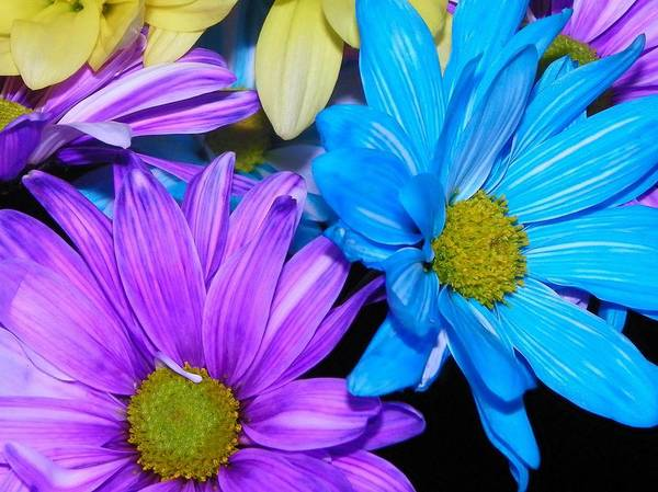 Christy Photograph - Very Colorful Flowers by Christy Patino