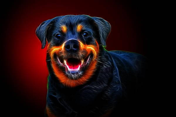 Service Dog Photograph - Very Merry Rottweiler by Alexey Bazhan