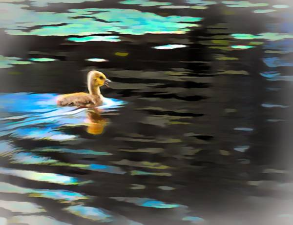 Digital Art - Very Young Gosling Swimming Alone. by Rusty R Smith