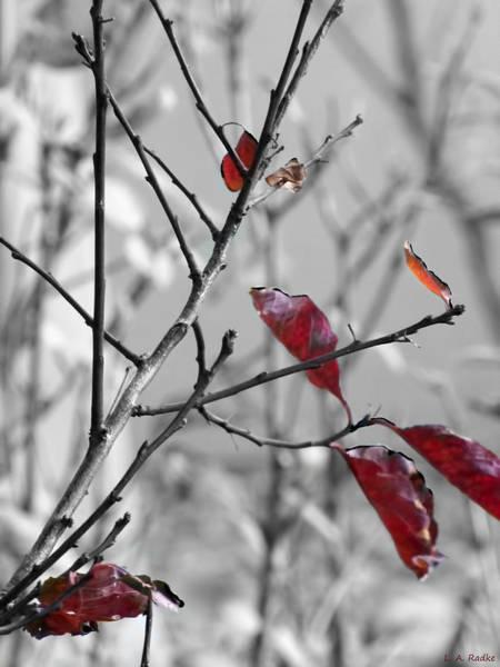 Photograph - Vestiges by Lauren Radke