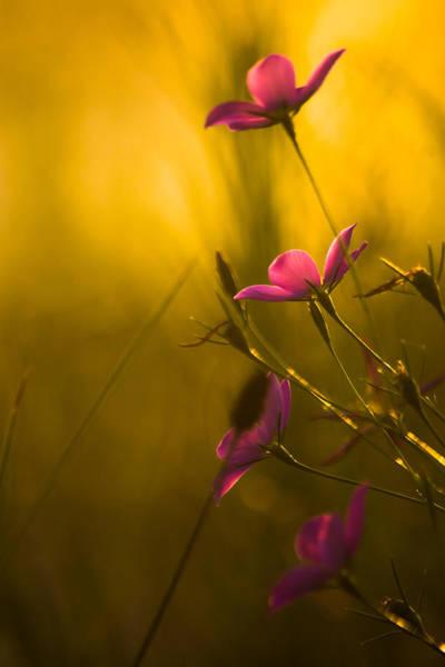 Photograph - Vibrant Colors by Parker Cunningham