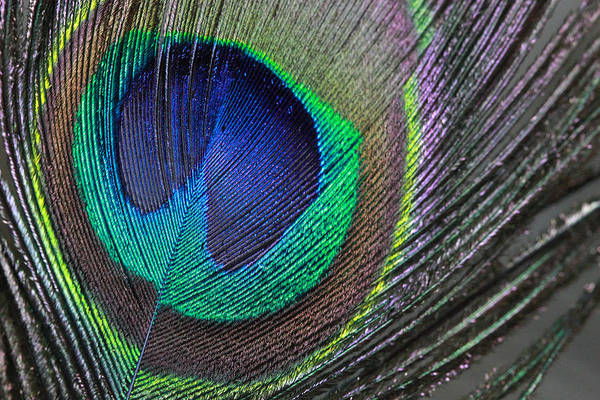 Photograph - Vibrant Green Feather by Angela Murdcok