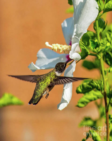 Wing Back Photograph - Vibrant Green by Stephen Whalen