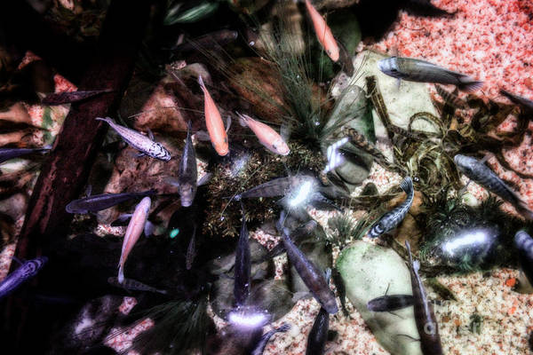 Photograph - Vibrant Lives Of Fish by Doc Braham