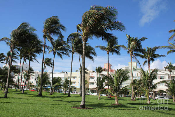 Photograph - Vibrant Ocean Drive With Palm Trees by Carol Groenen