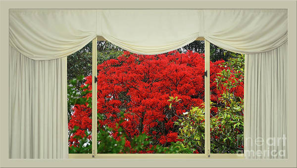 Wall Art - Photograph - Vibrant Red Blossoms Window View By Kaye Menner by Kaye Menner
