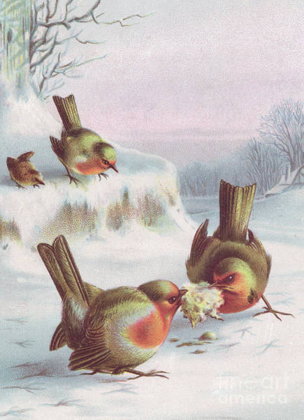Happy Little Trees Painting - Victorian Christmas Card Of Four Robins In The Snow, Two Having A Tug Of War Over A Scrap by English School