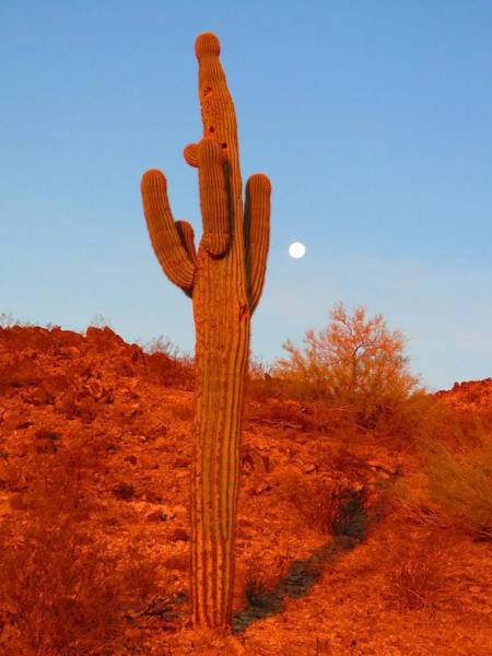 Photograph - Victor's Harvest Moonset by Judy Kennedy