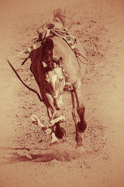 Wall Art - Photograph - Victory Dance by Caitlyn Grasso