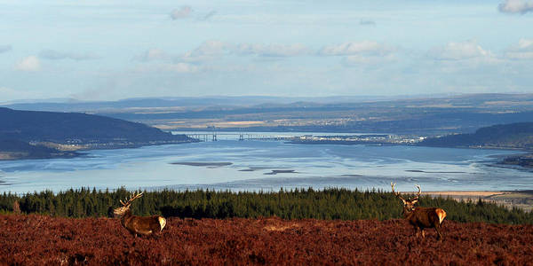 Photograph - View Down The Beauly Firth To Inverness by Gavin Macrae