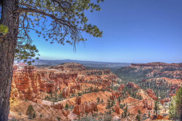 Photograph - View Framed With Tree Bryce National Park by Dan Friend