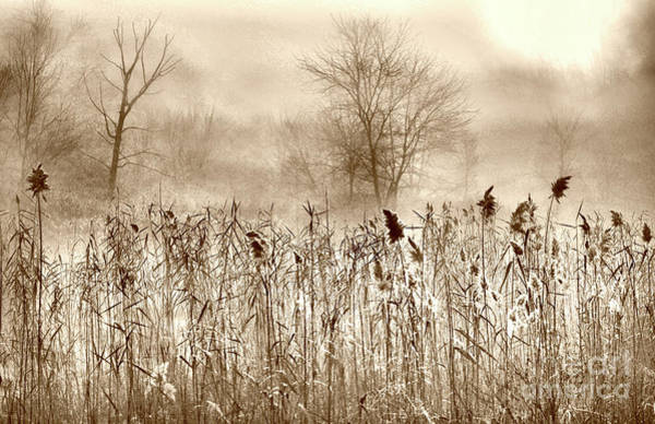 Critters Photograph - View From The Blind by Skip Willits