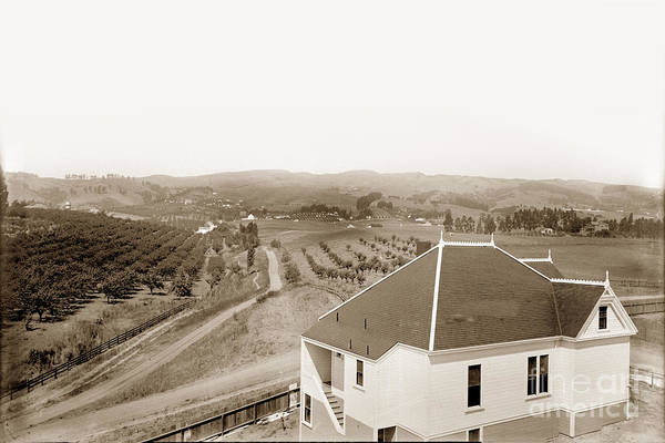 Photograph - View Of Foothill Orchards. This View Of Orchards In The Foothill by California Views Archives Mr Pat Hathaway Archives
