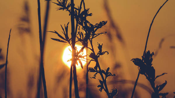Photograph - View Of Sun Setting Behind Long Grass D by Jacek Wojnarowski
