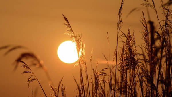 Photograph - View Of Sun Setting Behind Long Grass E by Jacek Wojnarowski