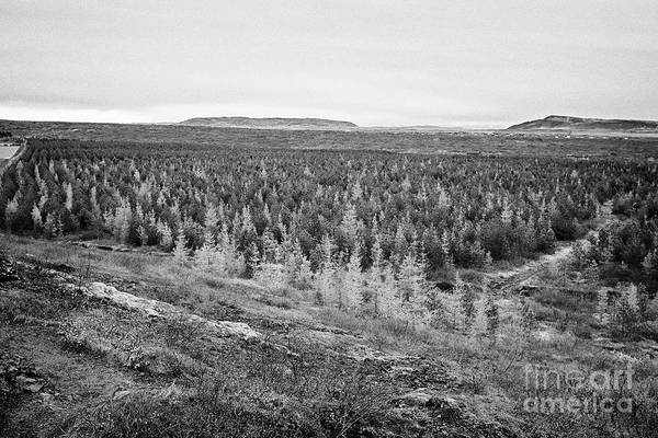 Wall Art - Photograph - view of the caldera, planted pine forest and lava fields of the kerid volcano region southern Icelan by Joe Fox