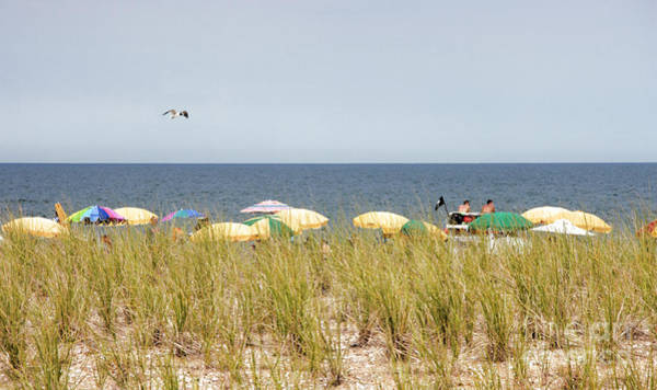 Photograph - View Over The Barrier Dune At Bethany Beach In Delaware by William Kuta