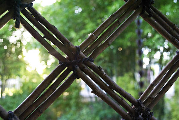 Wall Art - Photograph - View Through Bamboo by Courtney Lively