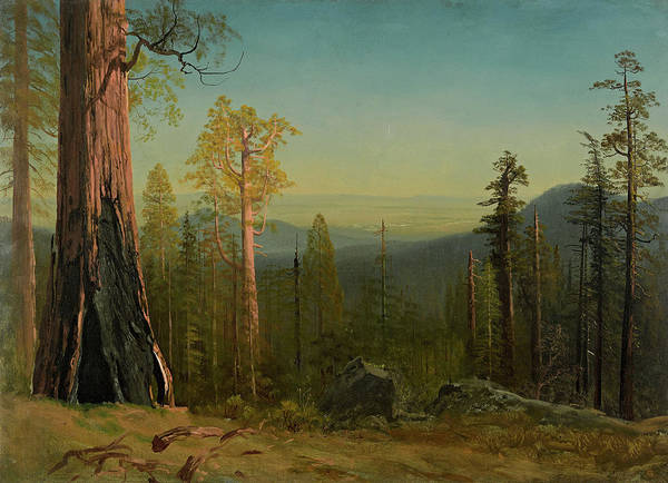 Dome Painting - View Through The Trees by Albert Bierstadt
