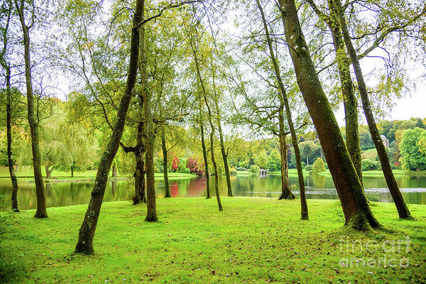 Photograph - View Through The Trees by Colin Rayner