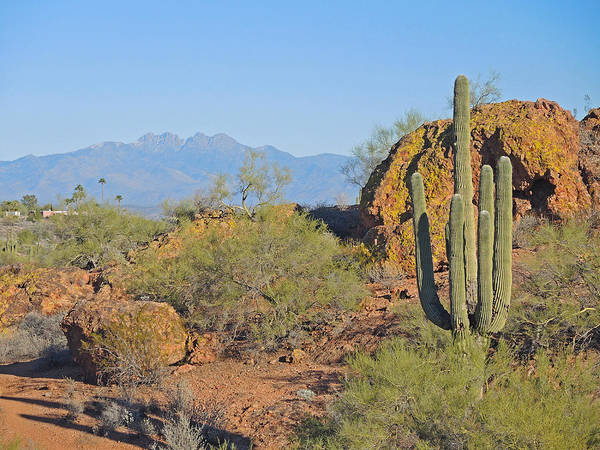 Photograph - View To Four Peaks by Lynda Lehmann