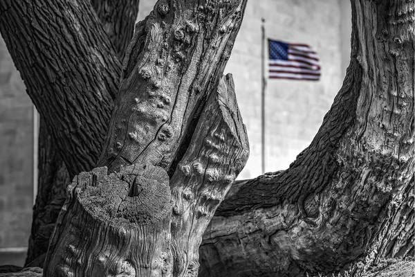 Photograph - View To The Washington Monument Sc by Susan Candelario