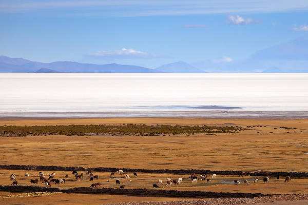 Photograph - View To Uyuni Lake With Lllamas by Aivar Mikko