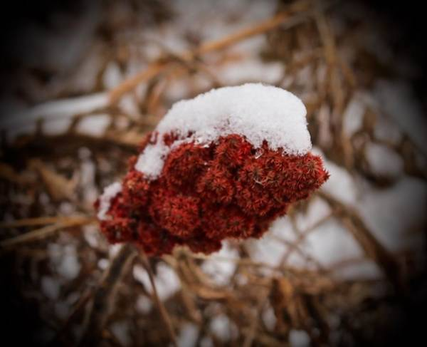 Photograph - Vignettes - First Snow 1 by Mario MJ Perron