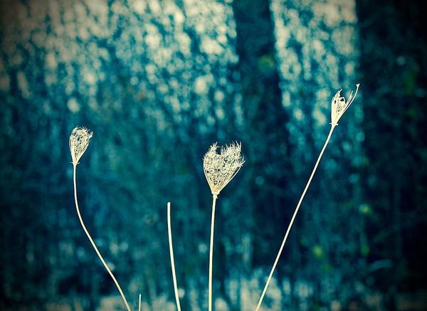 Photograph - Vignettes - Winter Flowers by Mario MJ Perron