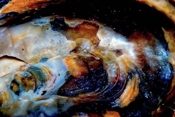 Vilano Sea Shell Constellation Art Print