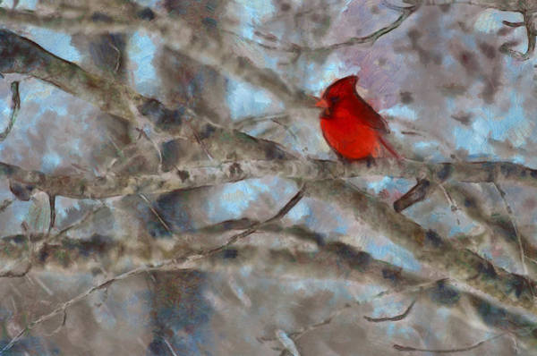 Cardinal Mixed Media - Vincent by Trish Tritz