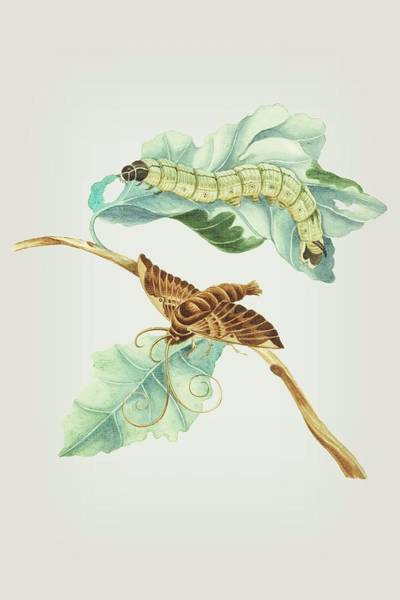 Mixed Media - Vine Branch Caterpillar And Butterfly By Cornelis Markee 1763 by Cornelis Markee