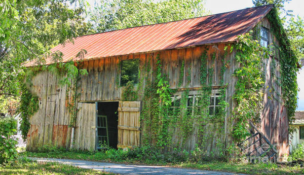 Wall Art - Photograph - Vine Covered Barn  9727 by Jack Schultz