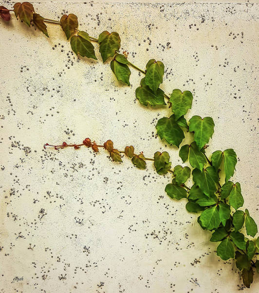 Wall Art - Photograph - Vine by Elijah Knight