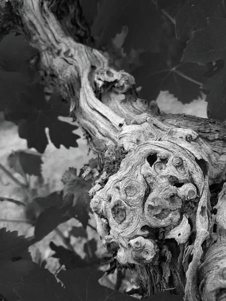 Wall Art - Photograph - Vine Trunk And Leaves Monochrome Abstract 2 by Iordanis Pallikaras