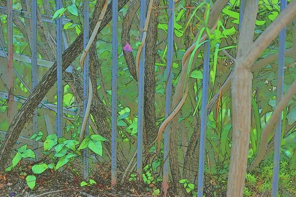 Wall Art - Digital Art - Vines Abstract IIi by Linda Brody