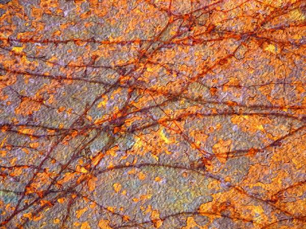 Photograph - Vines And Rust 3 by Lynda Lehmann