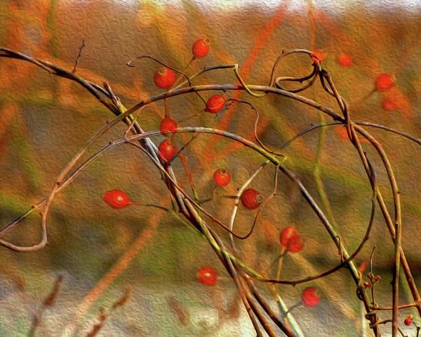 Digital Art - Vines And Winterberries by Lynda Lehmann