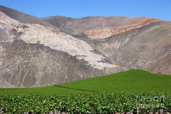 Photograph - Vineyards In The Atacama Desert Chile by James Brunker
