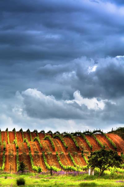 Photograph - Vineyard 01 by Edgar Laureano