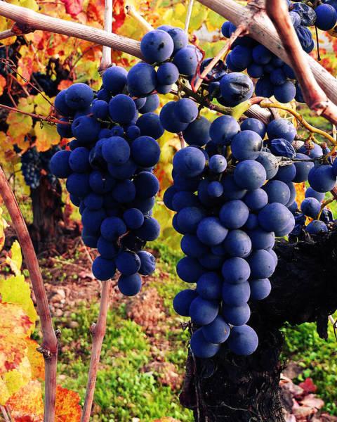 Photograph - Vineyard 10 by Xueling Zou