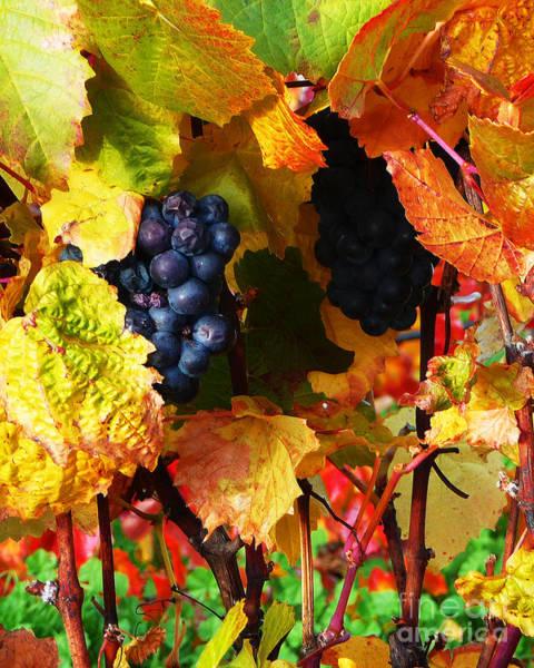 Photograph - Vineyard 18 by Xueling Zou