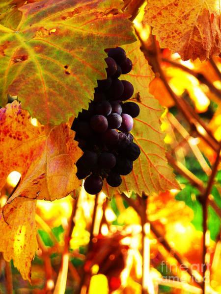 Photograph - Vineyard 20 by Xueling Zou
