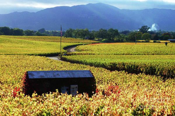 Photograph - Vineyard 25 by Xueling Zou