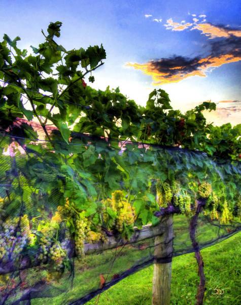 Photograph - Vineyard 6 by Sam Davis Johnson