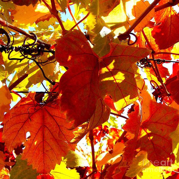 Photograph - Vineyard 9  by Xueling Zou