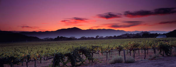 Grapevine Photograph - Vineyard At Sunset, Napa Valley by Panoramic Images